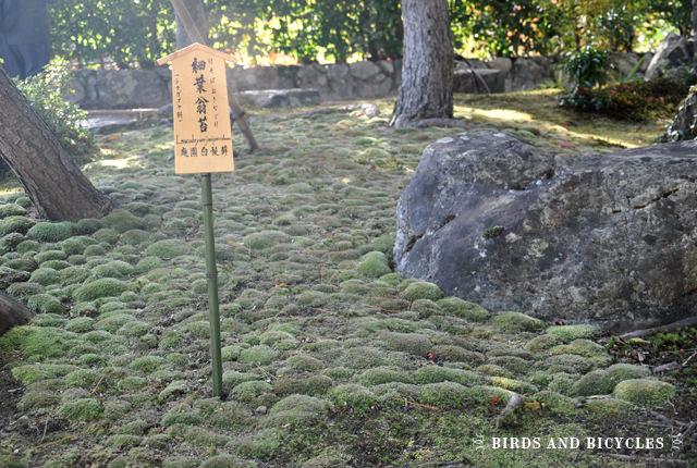 Arashiyama - Temple du Tenryuji