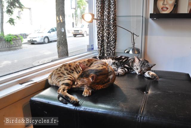 Moov, le salon de coiffure à chats