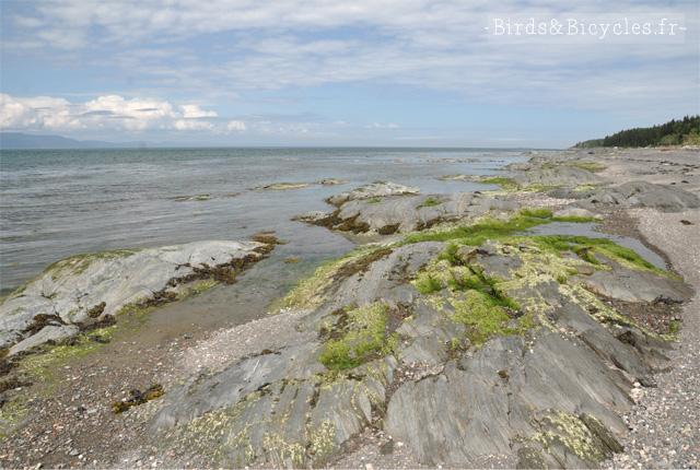 Balade nature sur l''Île aux Lièvres au Québec