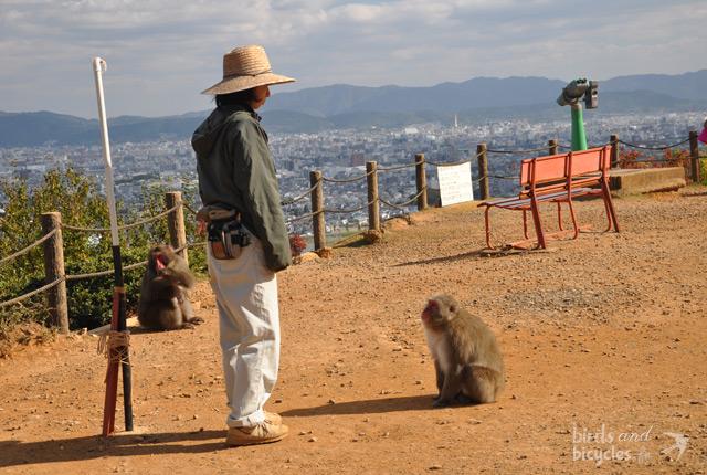 Des singes à Kyoto, en semi-liberté...