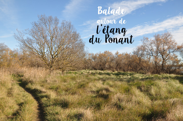 Balade au bord des étangs, autour de Montpellier. L'étang du Ponant.