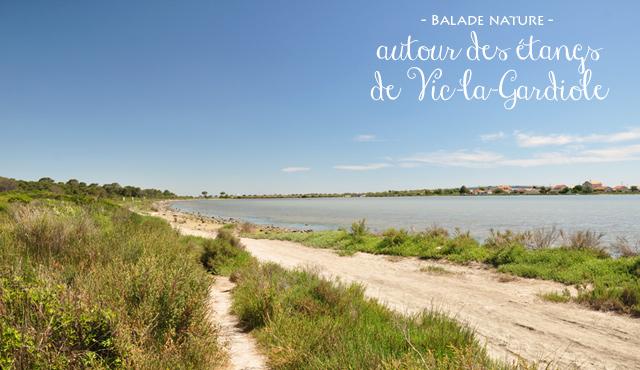 Randonnée dans les étangs de l'Hérault
