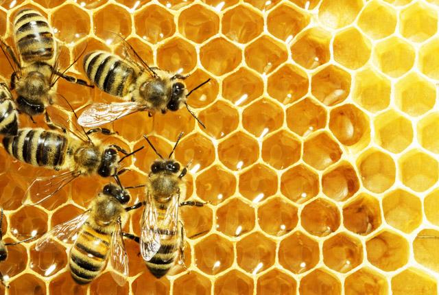 Des gestes pour aider les abeilles!