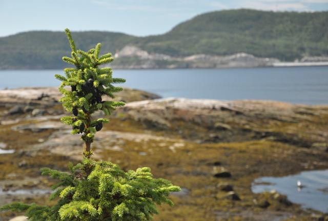 Voyage au Québec: Tadoussac