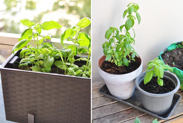 que planter sur son balcon des id es pour se lancer dans un potager urbain. Black Bedroom Furniture Sets. Home Design Ideas