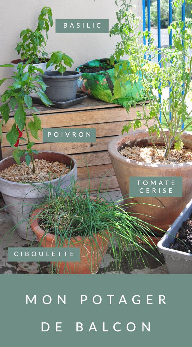 Jardinage urbain: mon potager de balcon