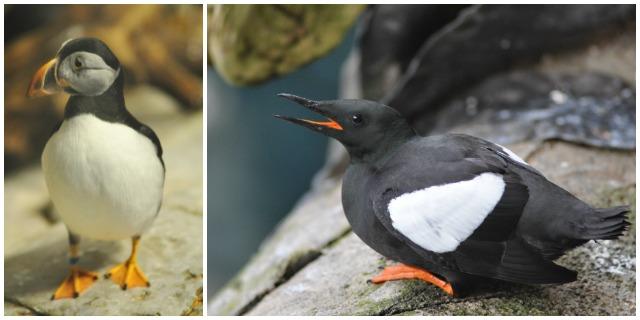 oiseaux-de-mer-au-biodome-a-montreal