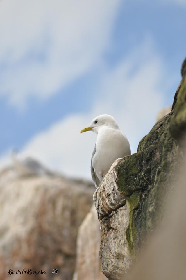 oiseaux-de-mer-au-biodome-de-montreal
