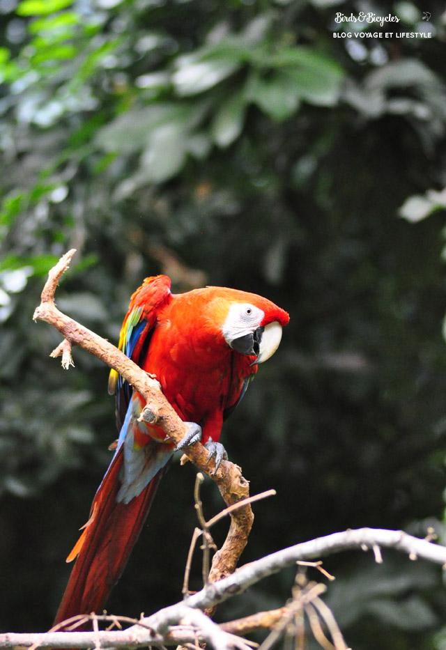 Les oiseaux du Biodôme de Montréal: un ara rouge