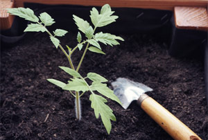 Que planter sur son balcon? Des idées pour faire pousser des légumes et des aromatiques en pots!