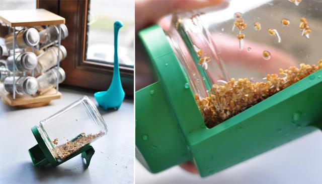Bocal germline pour faire pousser les graines germées