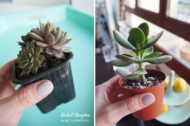 Succulentes! Petits bonheurs - blog lifestyle féminin Birds & Bicycles