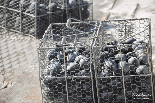 Voyage à Hakone au Japon: goûter les oeufs noirs !