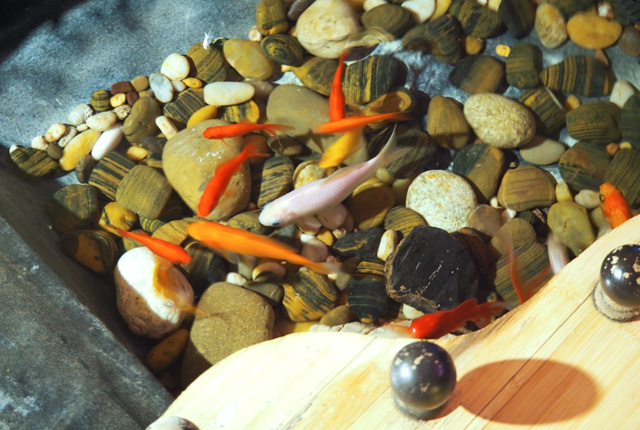 Adresse metz le restaurant japonais osaka blog birds for Carpe koi lorraine