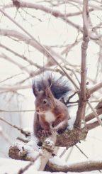 Le petit écureuil sur mon balcon - Crédit Blog Lifestyle Birds & Bicycles