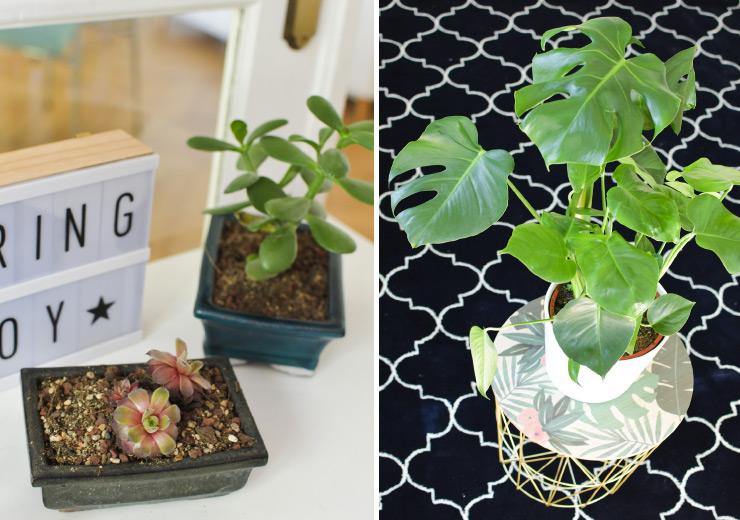 Mes petites plantes - Urban Jungle blogger