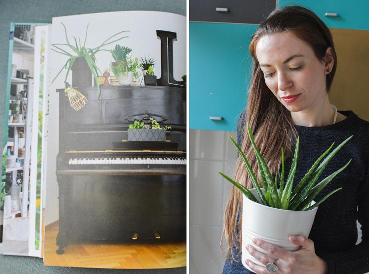 Mon aloe vera: j'ai ajouté une touche verte chez moi après m'être intéressée à la tendance Urban Jungle