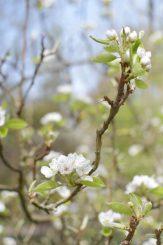 Le printemps au jardin botanique de Mulhouse