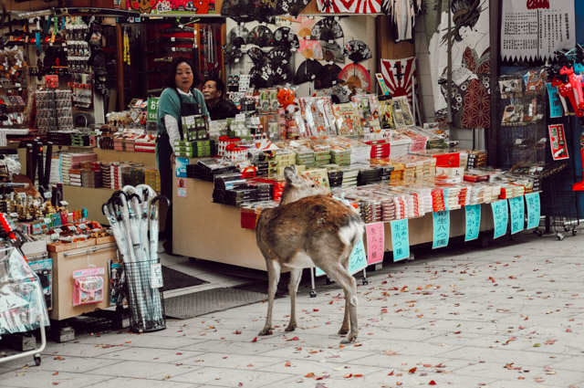 Les daims de Nara au Japon - Blog Birds & Bicycles