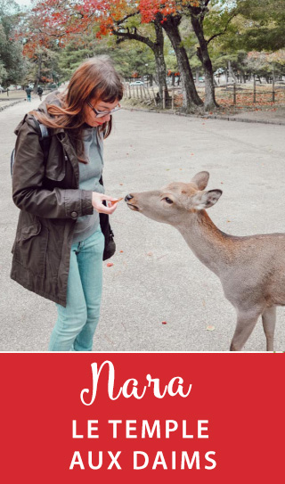 Rencontre avec les daims de Nara dans leur sanctuaire au Japon