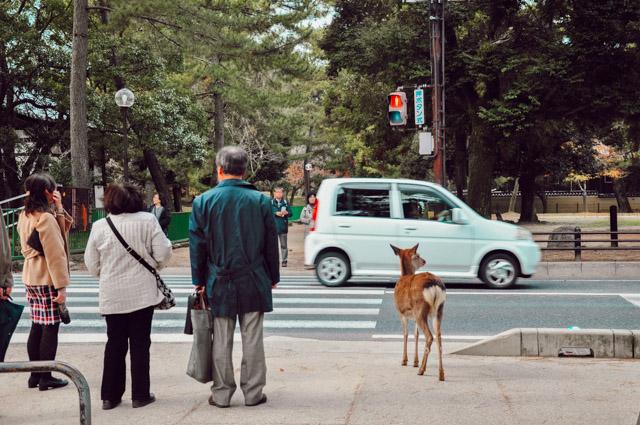 Nara et ses daims: un endroit à voir au Japon!