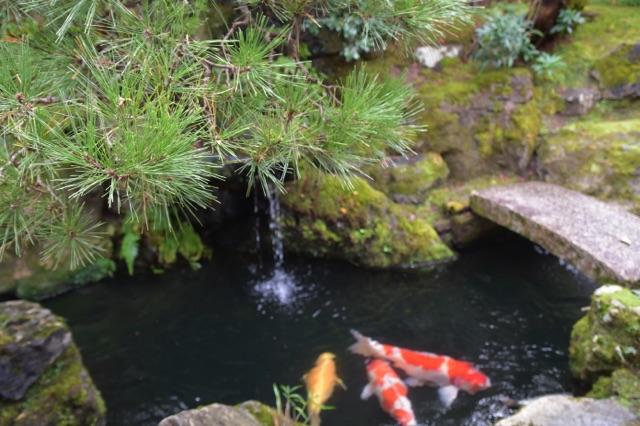 Etang carpes koi - Kyoto - Impressions de mon voyage au Japon