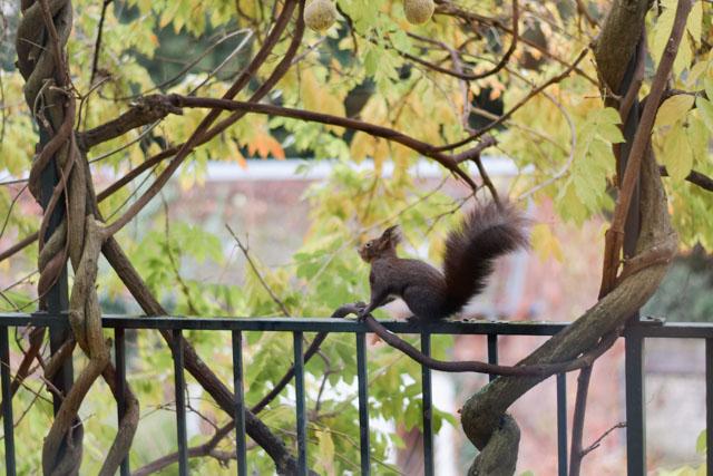 L'écureuil sur mon balcon !