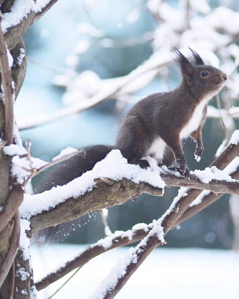 L'écureuil sur mon balcon