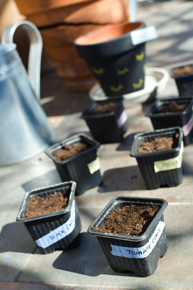 Mes plantations: astuces pour semer ses plants sous serre !