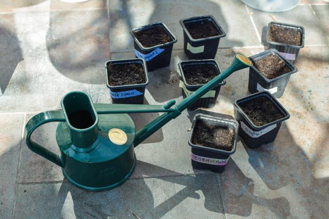 Réussir ses premières plantations: mes astuces