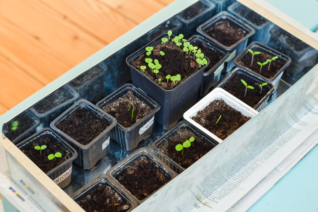 Jardinage de balcon & jardinage urbain sur le blog Birds & Bicycles