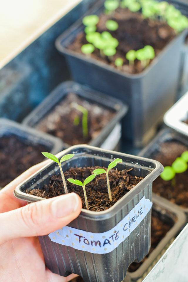Jardinage de balcon: mes astuces pour réussir ses semis