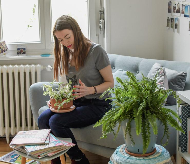 Mes plantes, ma jungle: Tradescantia et fougère