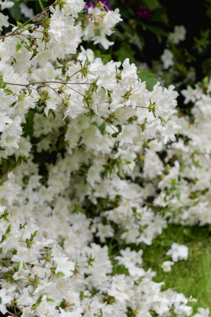 Admirer les fleurs saison après saison