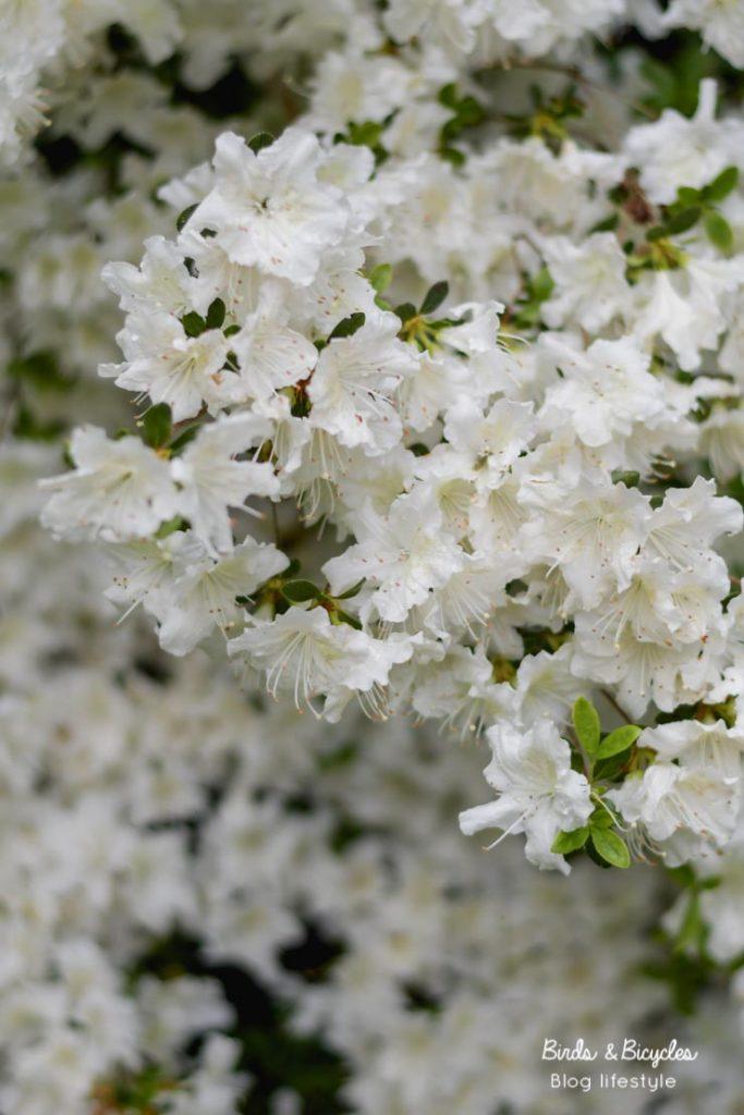 Floraisons au printemps
