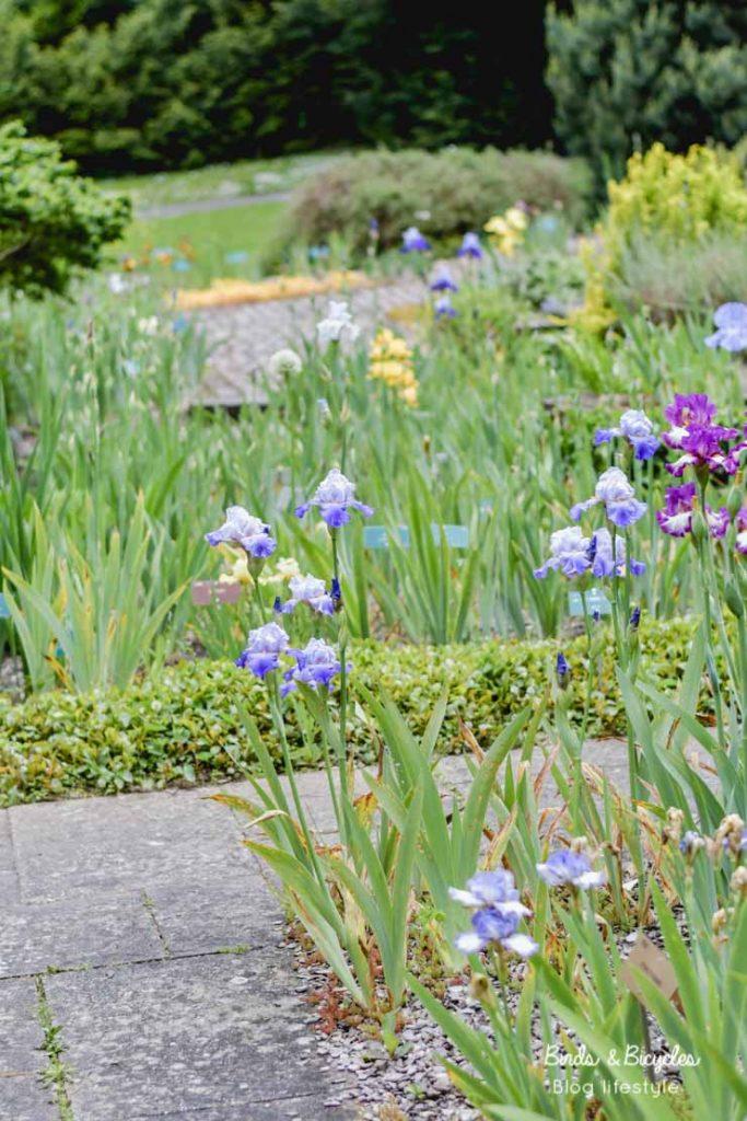 Au jardin des iris