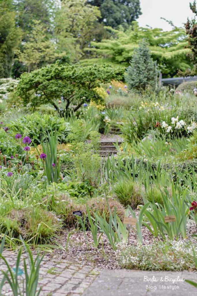Jardin des iris au jardin botanique de Mulhouse