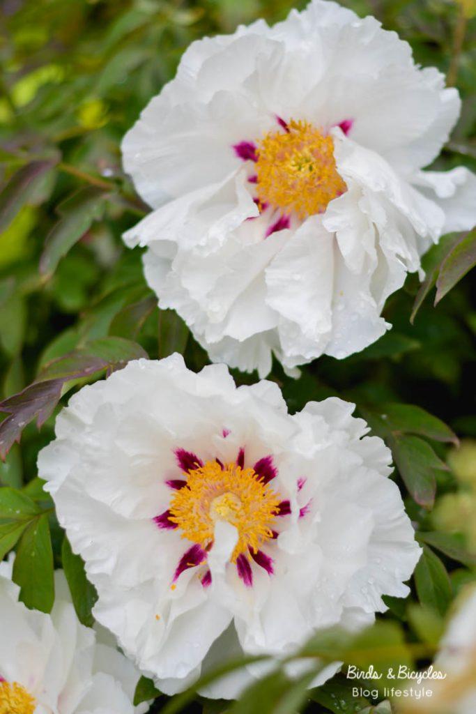 Admirer les fleurs au jardin botanique saison après saison