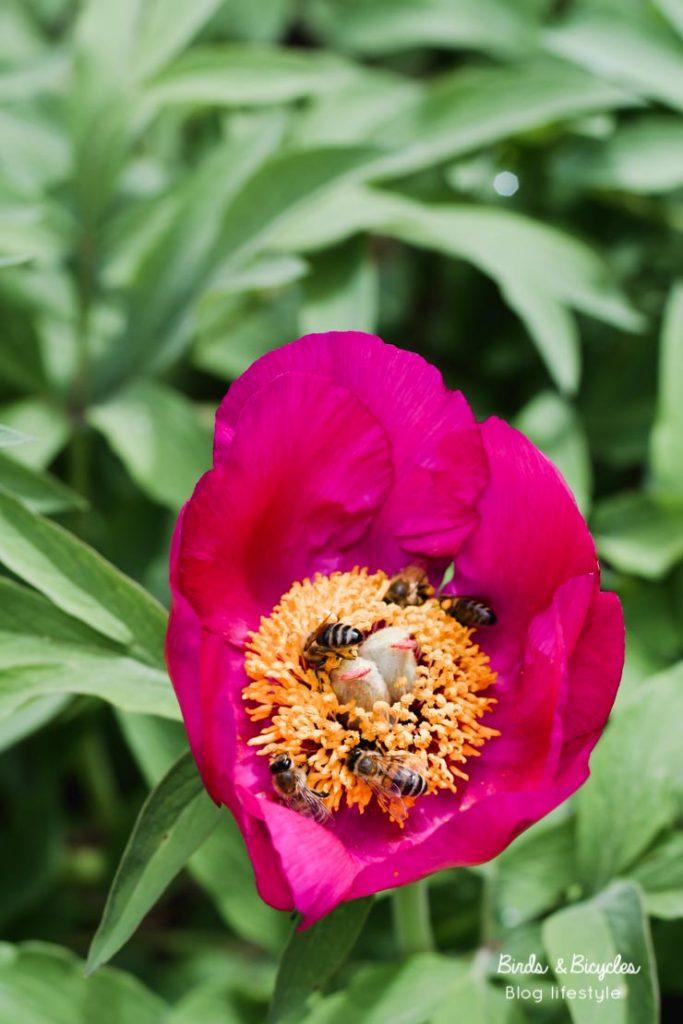 Découvrir le jardin botanique de Mulhouse