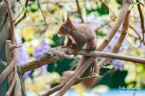 ecureuil sur mon balcon