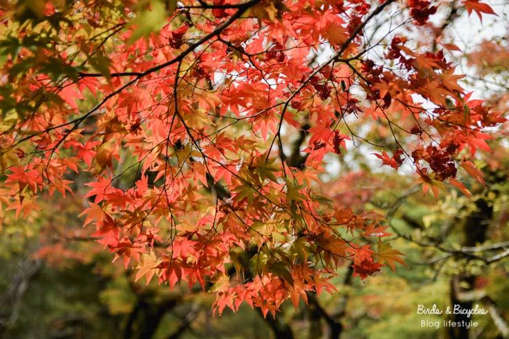 Voyage au Japon en automne, une super idée