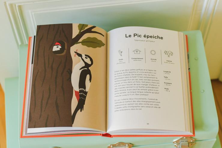Un pic épeiche - guide d'oiseaux illustré suisse par Lisa Voisard