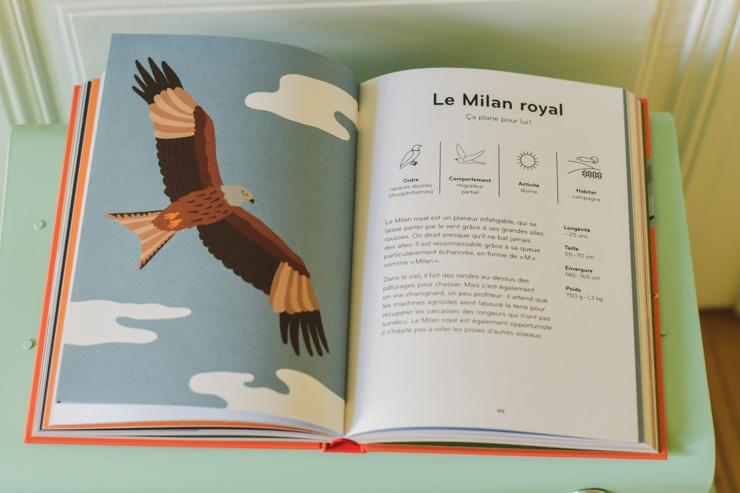 Coup de coeur livre sur les oiseaux - graphisme