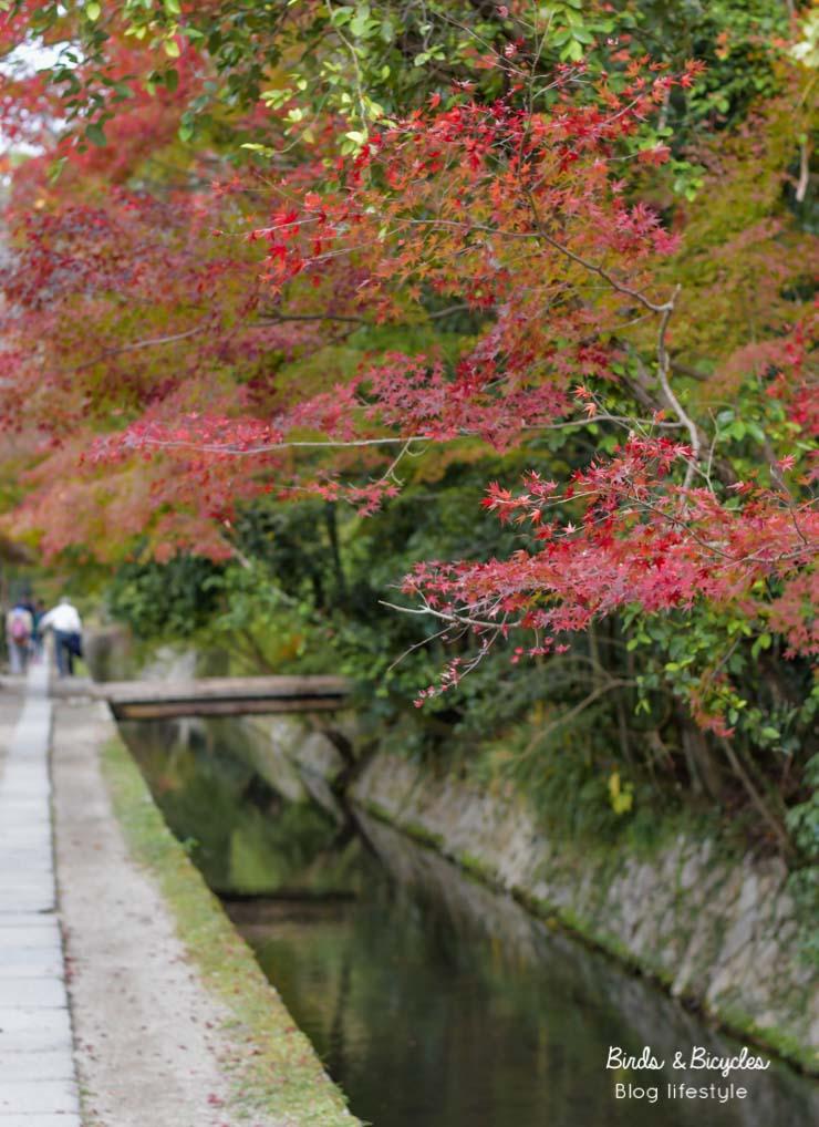 Sur le chemin de la philosophie à Kyoto. Que voir, que faire? Des idées sur le blog de voyage au Japon Birds & Bicycles