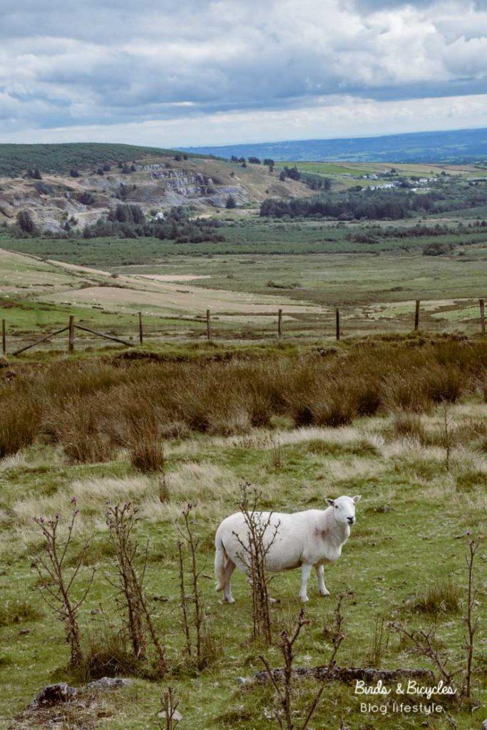 Visiter le Pays de Galles: idées et conseils sur le blog