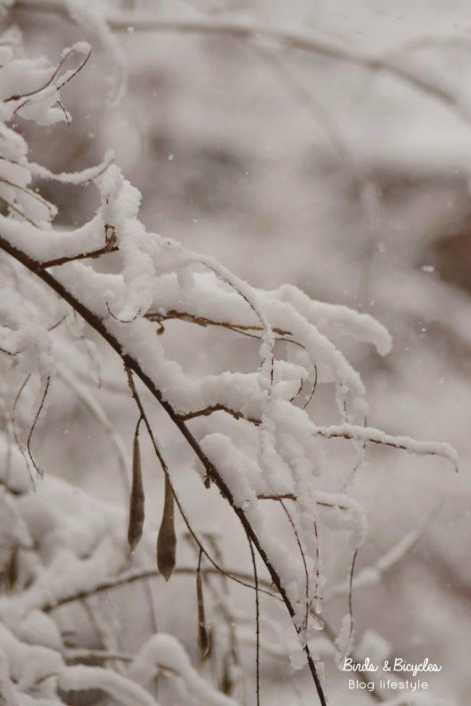 Poésie : photos sous la neige sur le blog