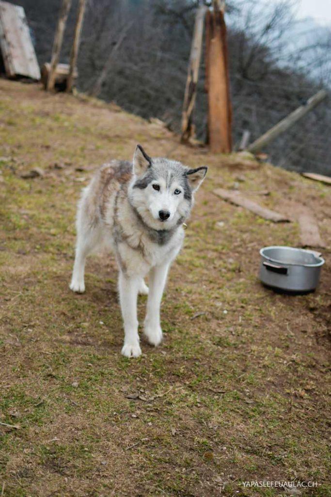 Près des huskys et des rennes lors d'un week-end dans les Vosges
