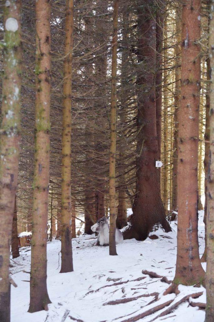 11 idées d'activités pour visiter les Vosges