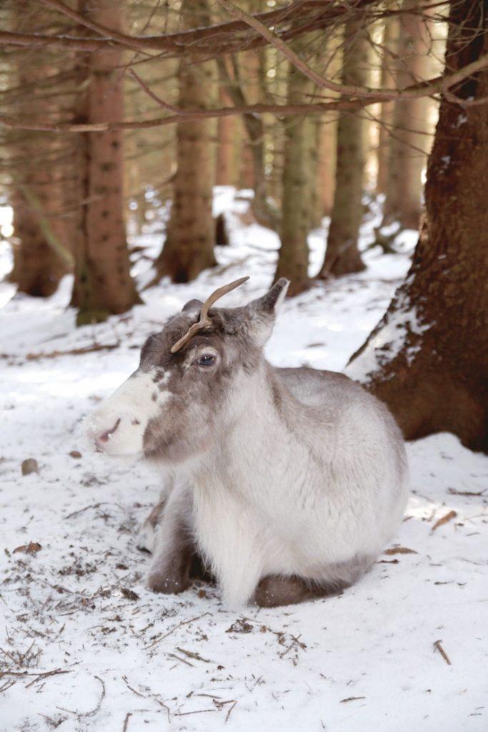 Les idées d'une blogueuse pour découvrir les Vosges